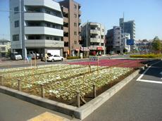 車道際の花壇